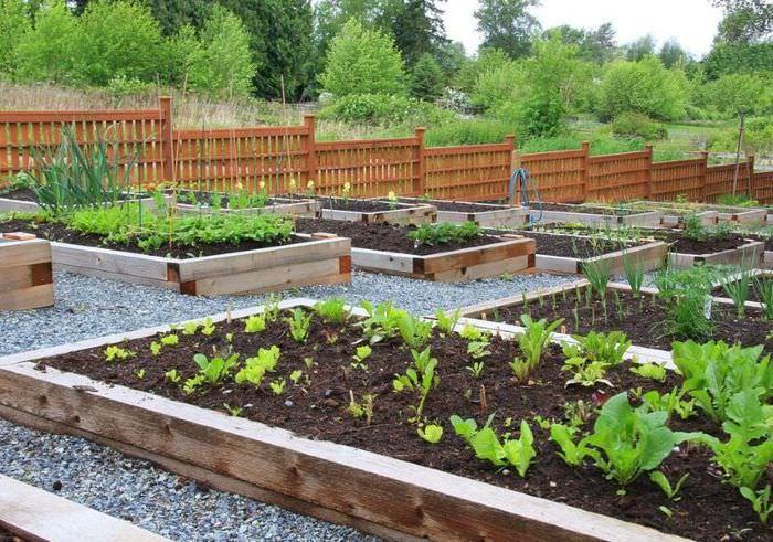 Деревянные грядке для выращивания овощей на склоне участка