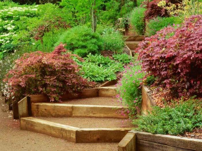 Декоративные кустарники вдоль садовой лестницы
